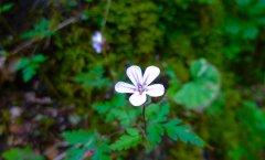 Alpe-Gschwenderberg-Blume-3.jpg